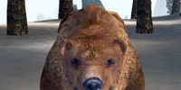 Bear (Bloodmoon)