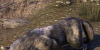 Ice (Dog)