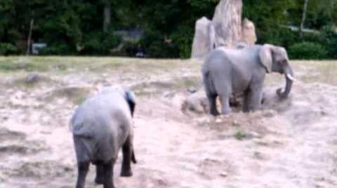 opel zoo elefanten