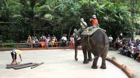 Sumatera Elephant Show Part 1 (Taman Safari)