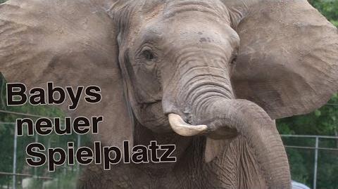 Zoo Safaripark Stukenbrock - Run, Baby, run