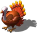 Turkey Live