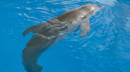 Dolphin Tale 9