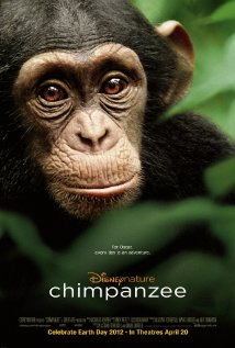 File:Chimpanzee.jpg