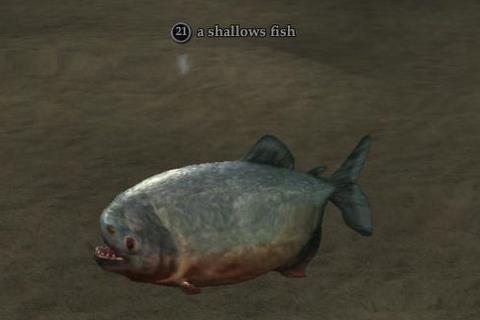 File:Shallows fish.jpg