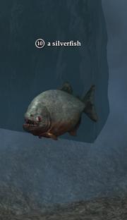 A silverfish