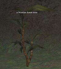 Nerian knot tree