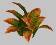 Leafy Autumnal Shrub (Visible)