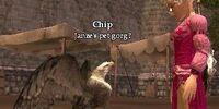 Pet Gorg