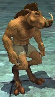 A Nuknok piglet (Pet)