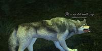 A weald wolf pup