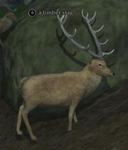 A timber stag