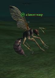 A lancer wasp