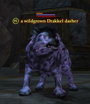 A wildgrown Drakkel dasher