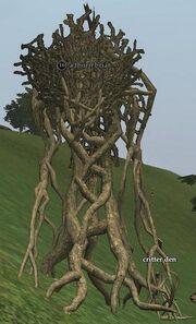 A thorn briar