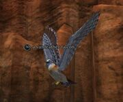 A sunfeather falcon