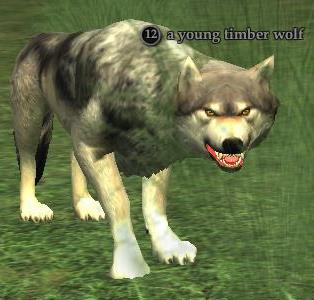 File:A young timber wolf.jpg