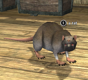 A rat (Far Journey)