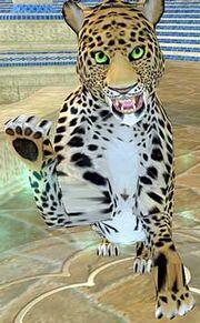 Race leopard