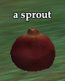 A sprout