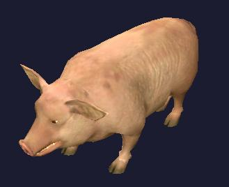 File:A common farm pig (Visible).jpg