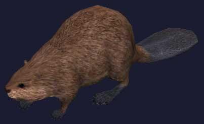 File:Race beaver.jpg