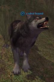 A rabid hound