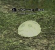 A Nek wasp larva
