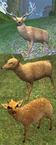Race deer