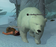 A feeding blizzard grizzly