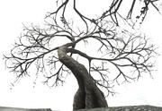 Vesspyr Willow