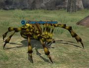 A large yellow recluse