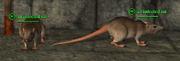 Rat (Berserker) Placed