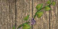 Wall-clinging vine