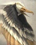 Águila FFXII