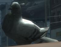Rata Voladora IV.PNG