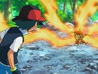 Archivo:EP550 Chimchar no obedece a Ash.png