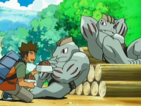 Archivo:EP526 Brock dando de comer a los Machoke.png