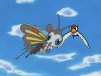 Archivo:EP340 Beautifly y Taillow enseñando a volar a Swablu.png