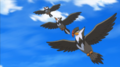 EP881 Starly, Staravia y Staraptor.png