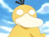 Archivo:EP036 Psyduck (2).png