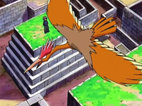 Archivo:EP515 Fearow.png