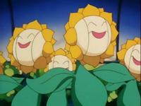 Archivo:EP137 Sunfloras de sonrisa.png