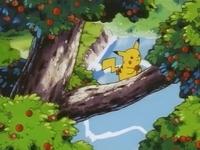 Archivo:EP039 Pikachu cogiendo una manzana.png
