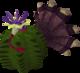 Turkey in cactus