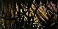 Bosque Muerto (Endor)