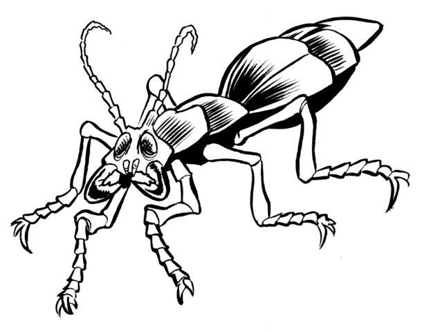 Archivo:Fefze beetle.jpg