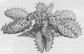Venus atrapahombres planta warhammer.jpg
