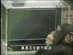 Peanuts Chimpanzee