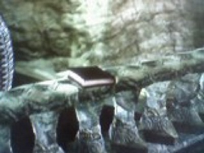 File:Dangerous Things Ladders.jpg